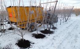 Compost mest aanbrengen als vorstbeschermer van de onderstam