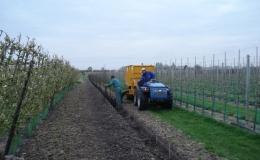 Compost aanbrengen bij aanplant fruitbomen